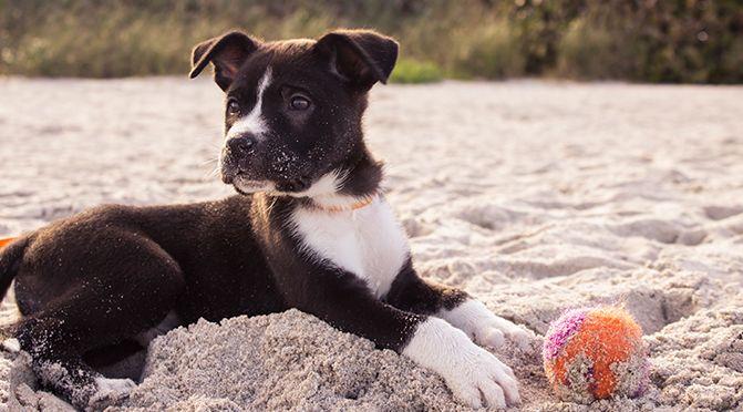 Welpen – die verrückten 5 Minuten beim Hund