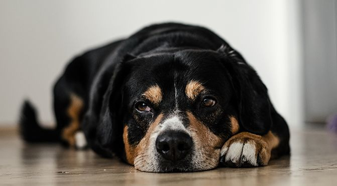 BGH urteilt bezüglich Tierhaltung in Wohnung