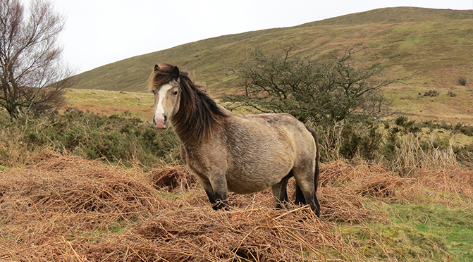 Unarten durch falsche Haltung – Einzelhaltung von Pferden und ihre Folgen