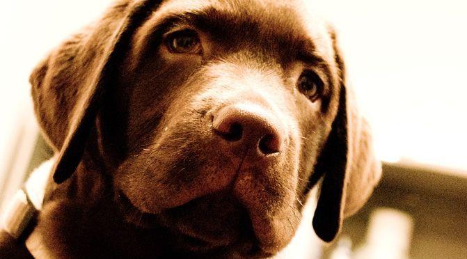 Der Hund auf der Couch – Verhaltenstherapie bei Tieren