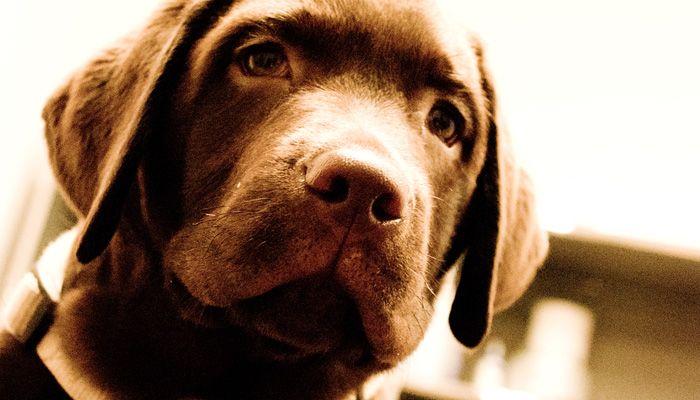 HundeAkupunkturMuenchen