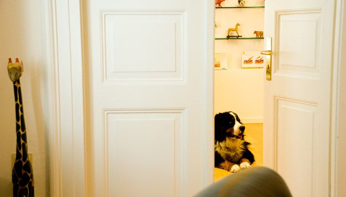 HundeBachbluetenMuenchen