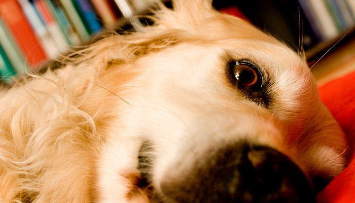 HundePhysiotherapieMuenchen