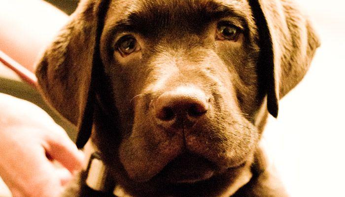 HundeVerhaltenstherapieMuenchen