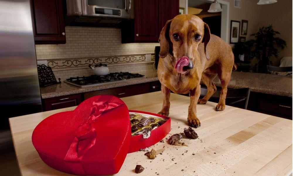 Vergiftungen bei Hunden und Katzen