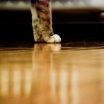 KatzeBachbluetenMuenchen
