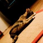 KatzenAkupunkturMuenchen