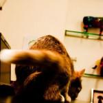 KatzenOsteopathieMuenchen