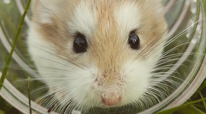 Richtige Hamsterhaltung