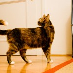 Bild4 Tierarzt München Akupunktur