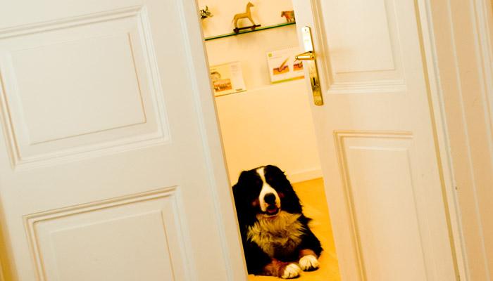 Tierarzt München Vorsorge