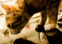 Tierarzt München Impfungen für Katzen