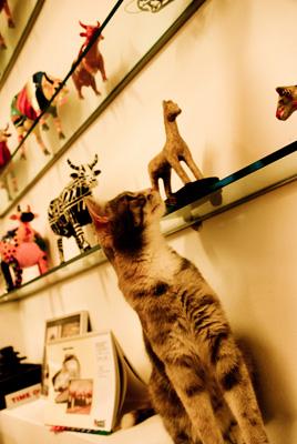 Katze beim Tierarzt München Harlaching
