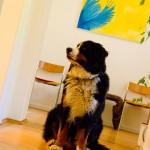 Hund beim Tierarzt in München