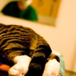 Katze beim Tierarzt in München