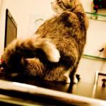 Ultraschall-Untersuchung des Herzens bei Tieren