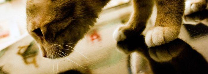 TierarztMuenchenLeistungen