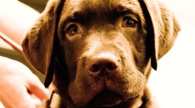Verlockende Fallen – Vergiftung beim Hund